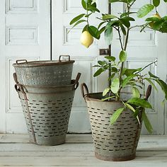 vintage-olive-buckets-shop-terrain
