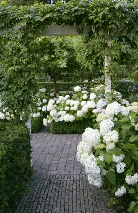 hydrangeas-garden-white-gorgeous