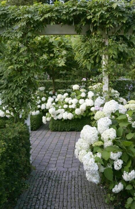 hydrangeas-garden-white-gorgeous