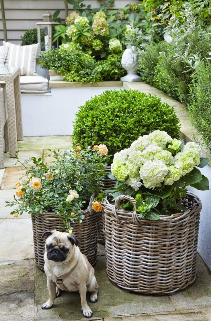 hydrangeas-white-garden-porch-patio-baskets-gorgeous