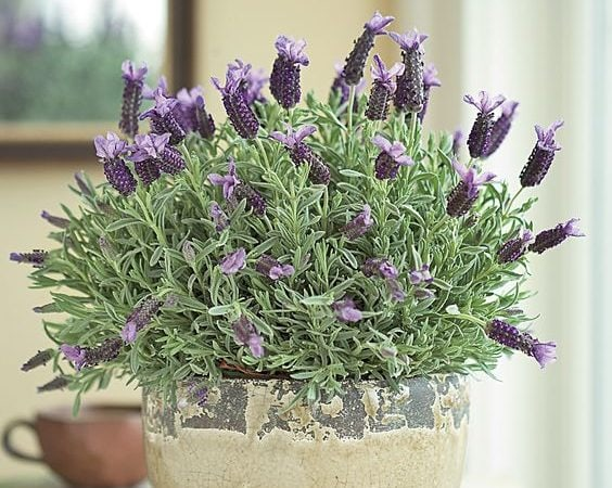 Friday Favorites – Decorating with Lavender