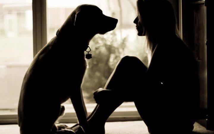 Thoughtful Sunday – A Dog's Love