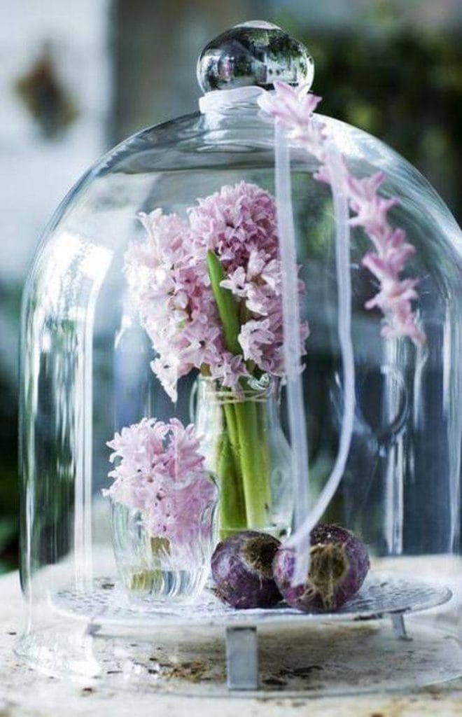 decorating cloches hyacinth spring decor gorgeous glass dome
