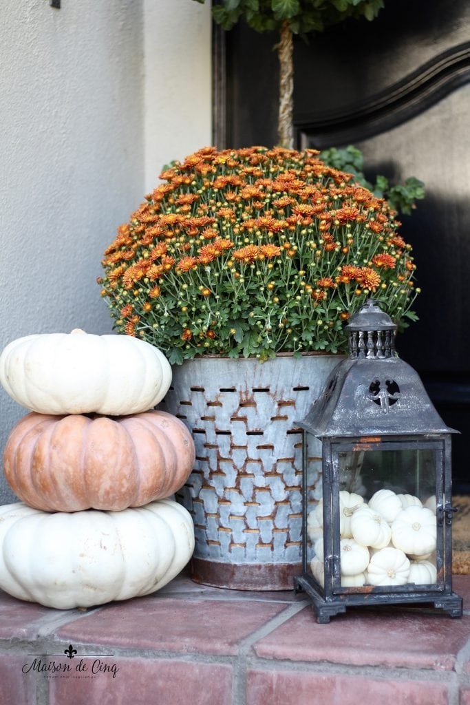 fall porch decor with mums in olive basket, lantern filled with baby boos and heirloom pumpkins