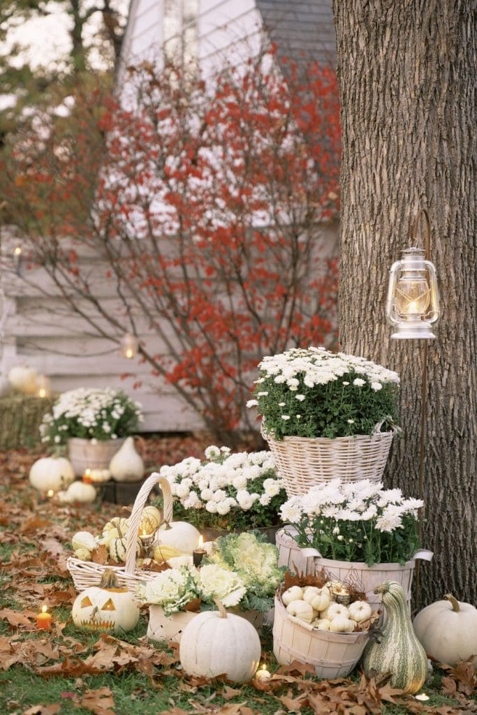 white pumpkins and white mums in baskets under trees gorgeous fall display