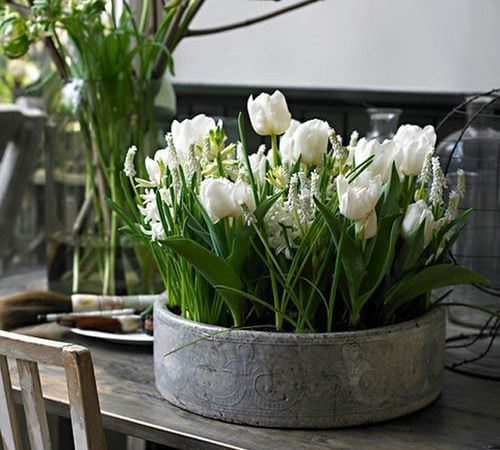 Friday Favorites – The Beauty and Charm of White Tulips