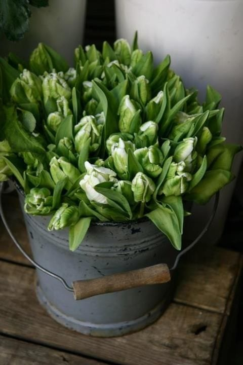 white-tulips-vintage-bucket-farmhouse-style