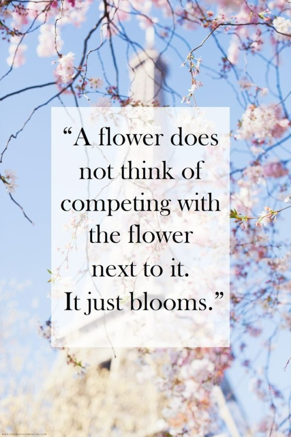 thoughtful sunday inspiring quote flowers bloom