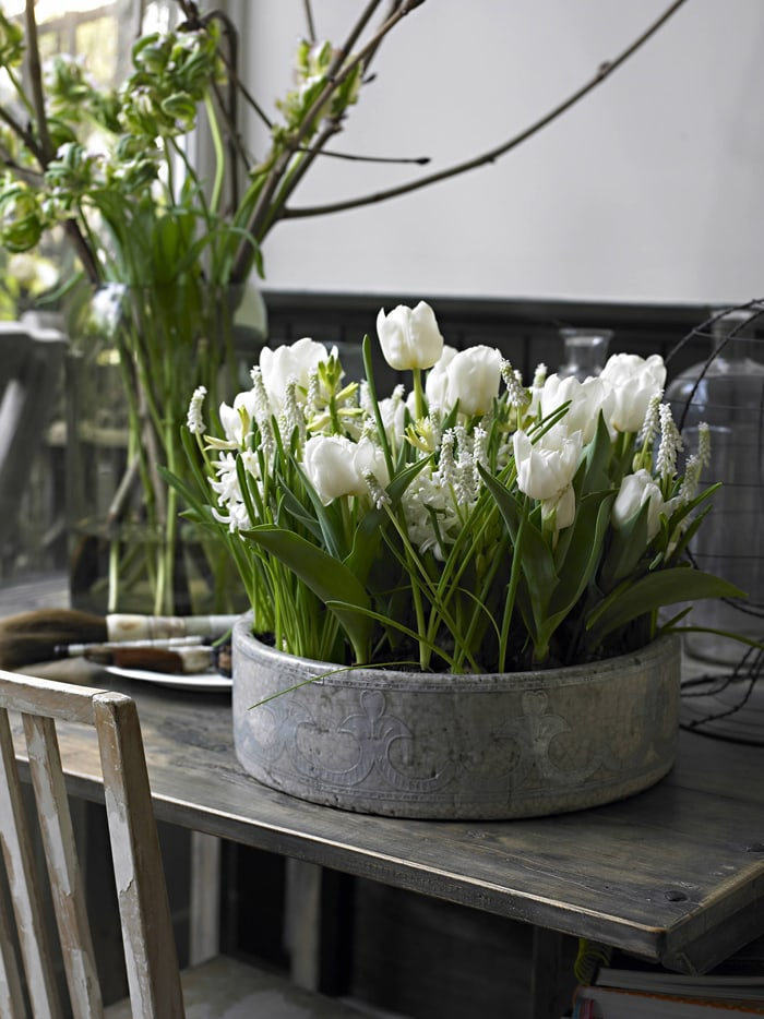 gorgeous white tulips in rustic planter