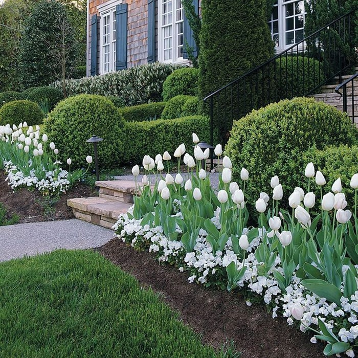 green garden with blooming white tulips