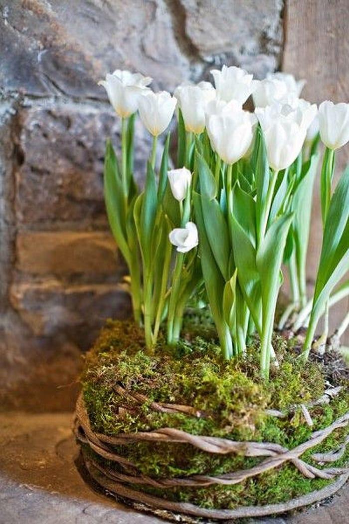 white tulips in mossy garden planter stunning arrangement wedding centerpiece