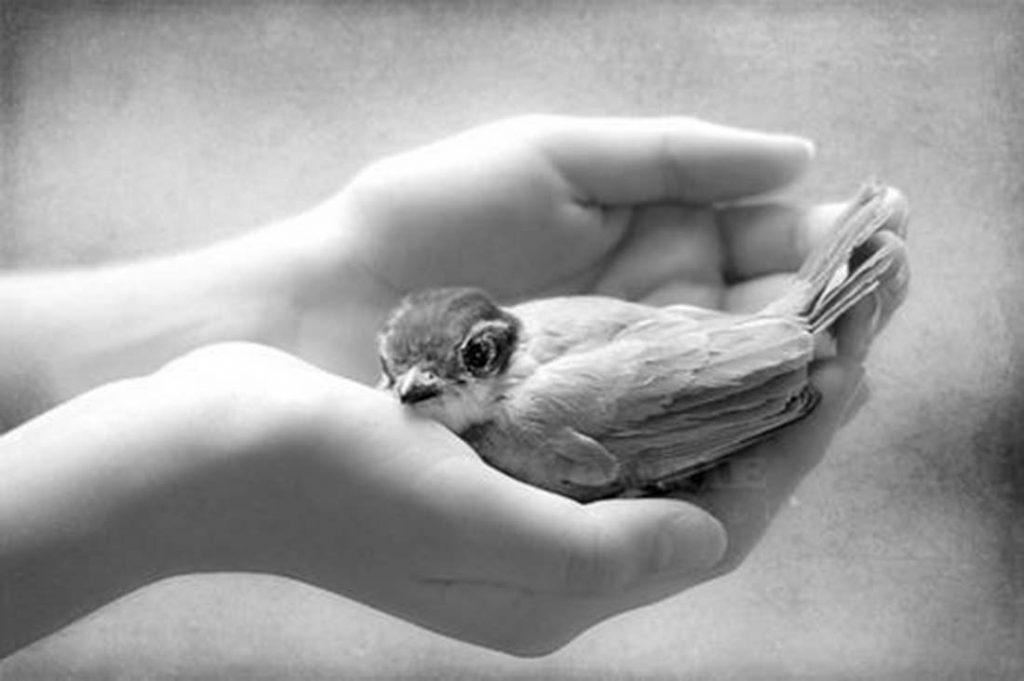 hands-kindness