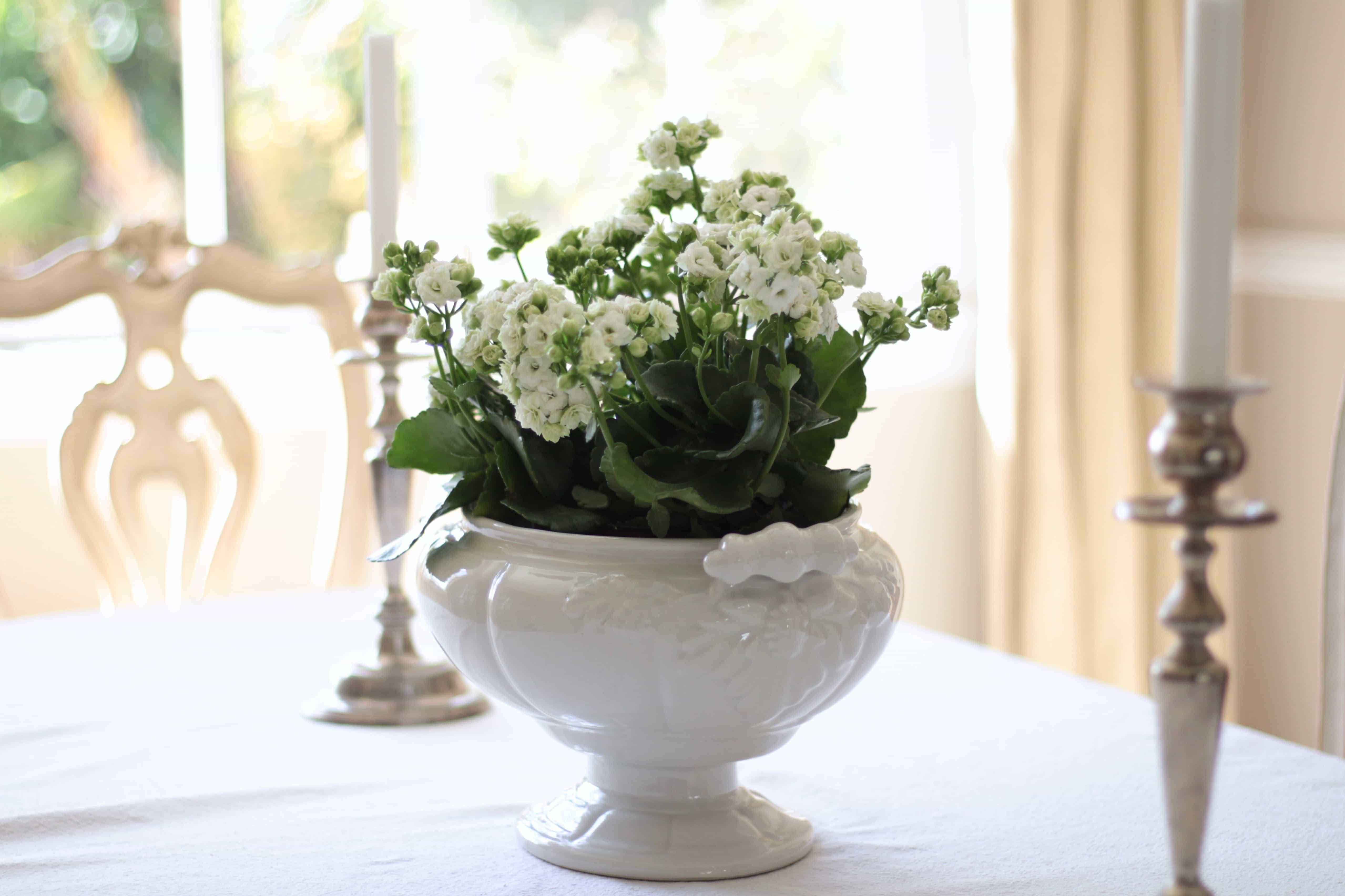 kalanchoe-decorating-flowers