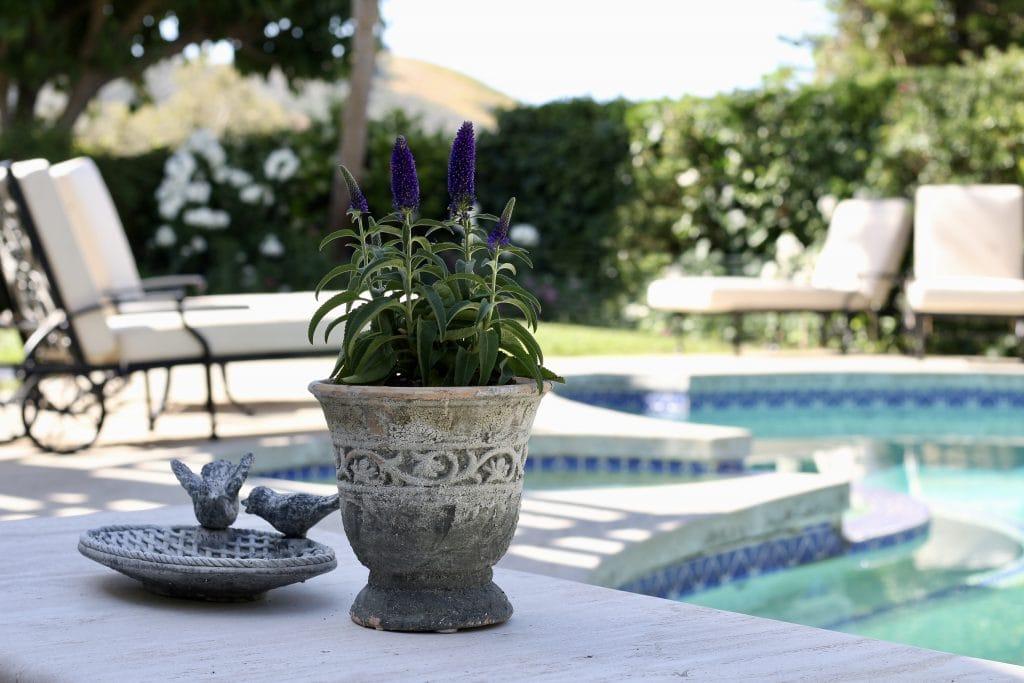 outdoor-space-backyard-pool-flowers