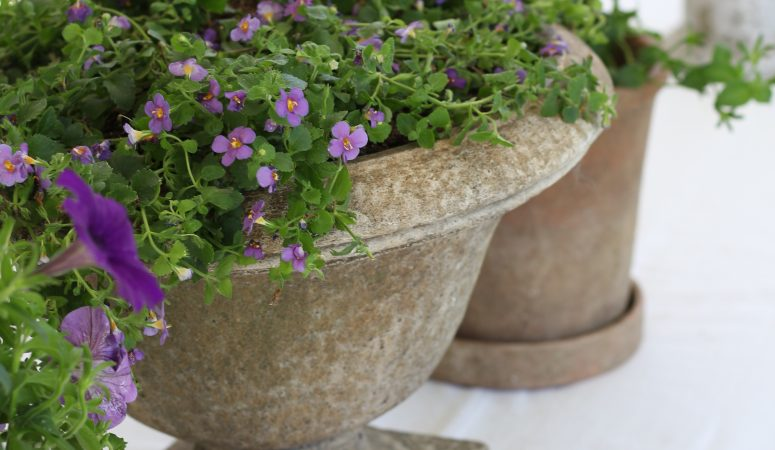 Backyard Refresh: How to Liven Up your Outdoor Space with Color