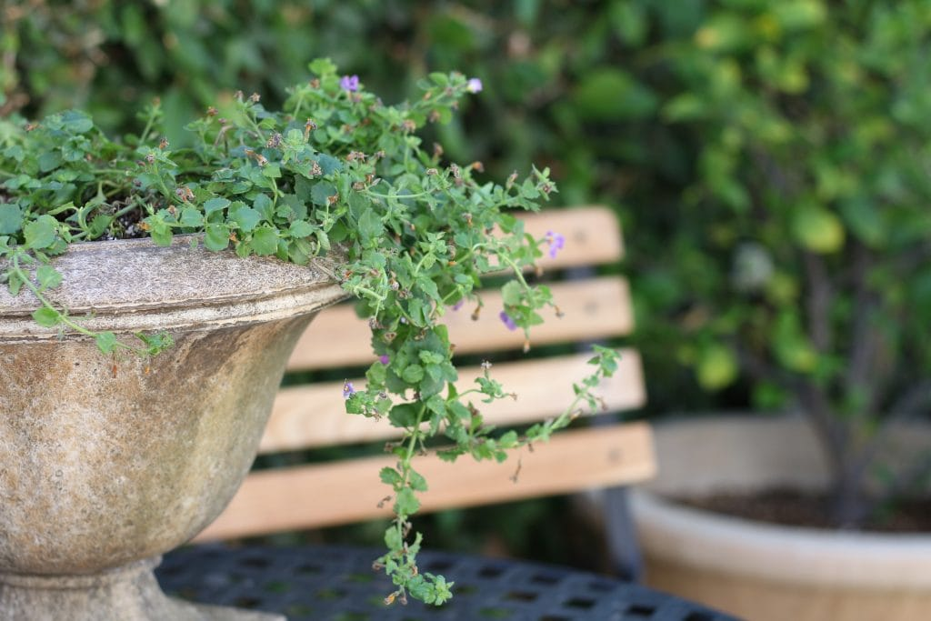 outdoor-space-potted-plant-close-up