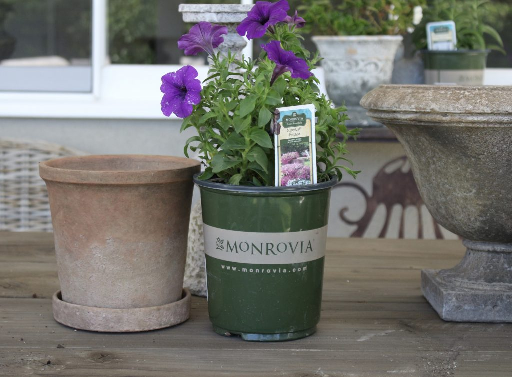 monrovia-plants-backyard-refresh-2