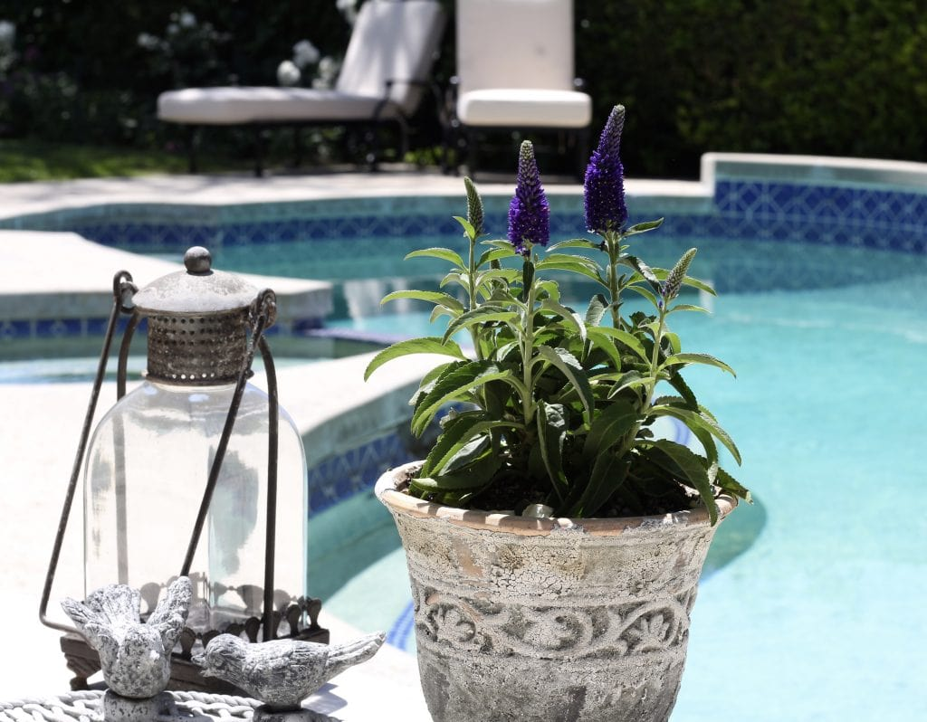 backyard-refresh-flowers-pool
