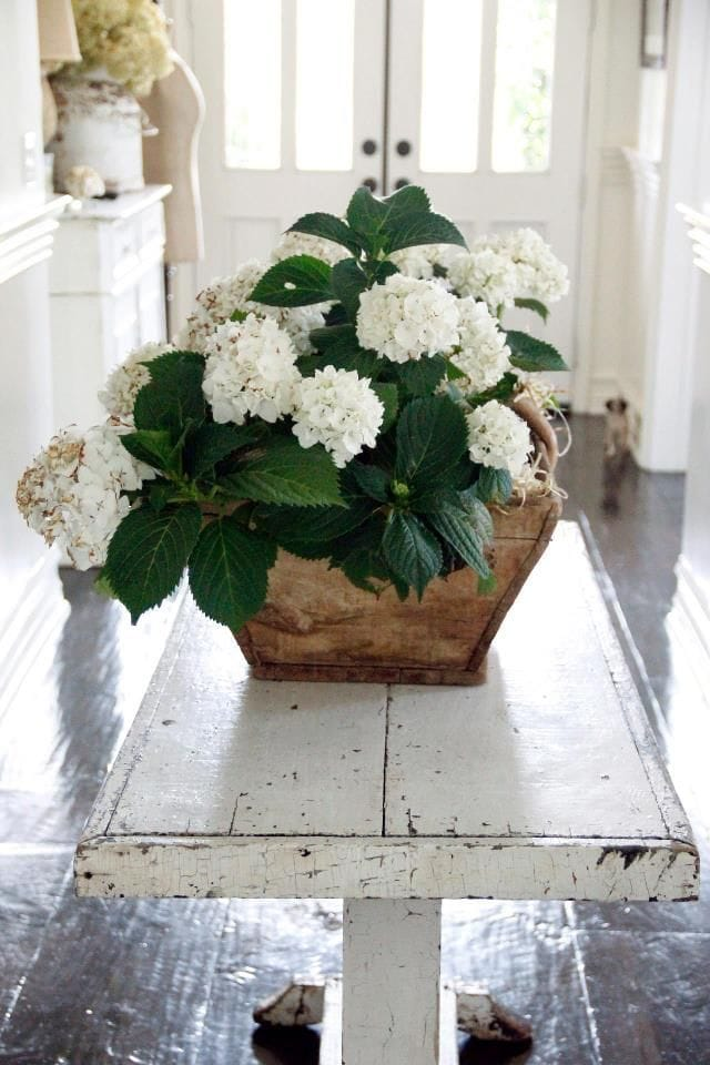 white hydrangeas wood box shabby chic farmhouse