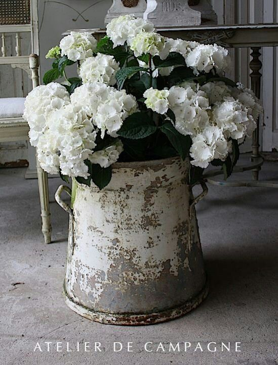 white hydrangeas crusty vintage bucket shabby chic chippy farmhouse