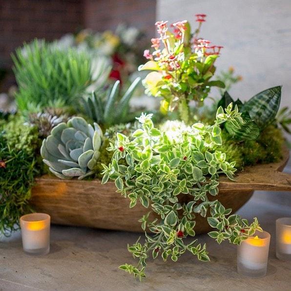 dough bowls succulents