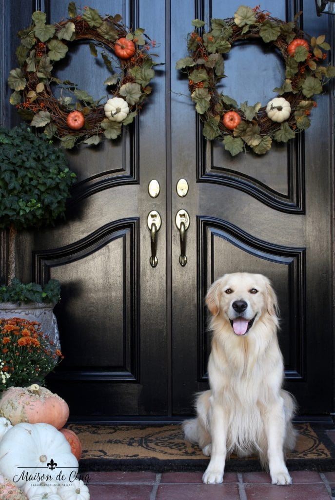 fall front porch black door wreaths pumpkins golden retriever