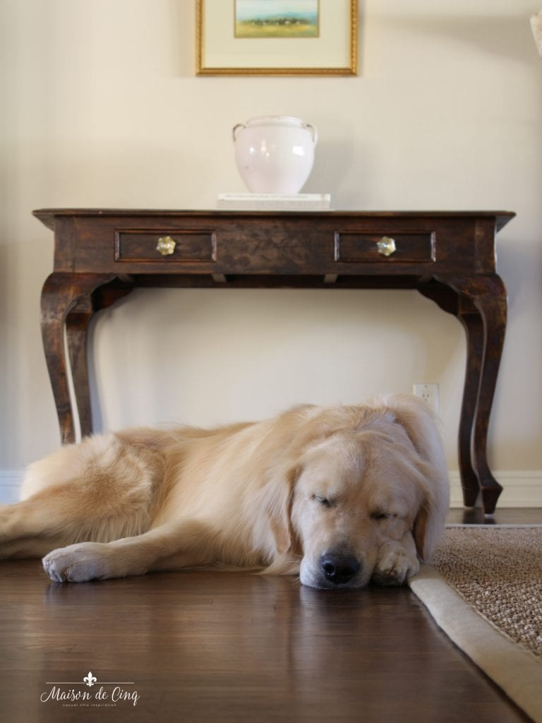 best way to clean your hardwood floors french country style room golden retriever