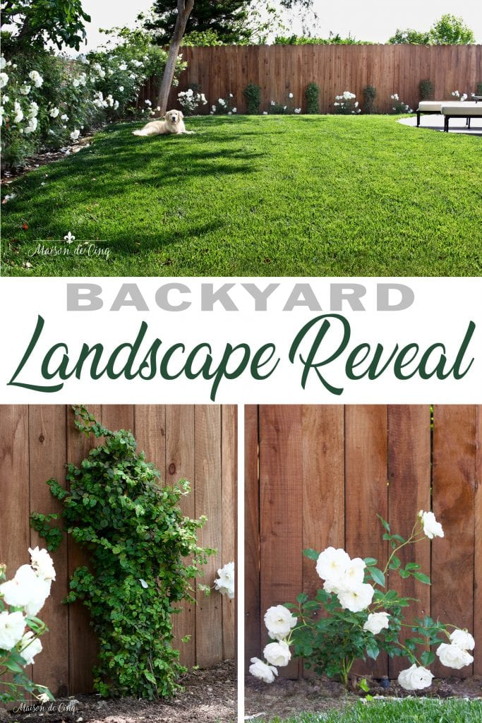 backyard landscape reveal new sod roses and plantings gorgeous yard with golden retriever