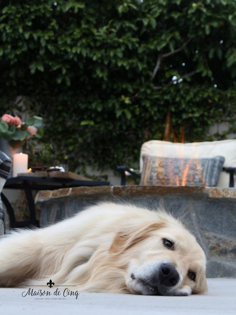 summer outdoor entertaining golden retriever dog by the fire pit