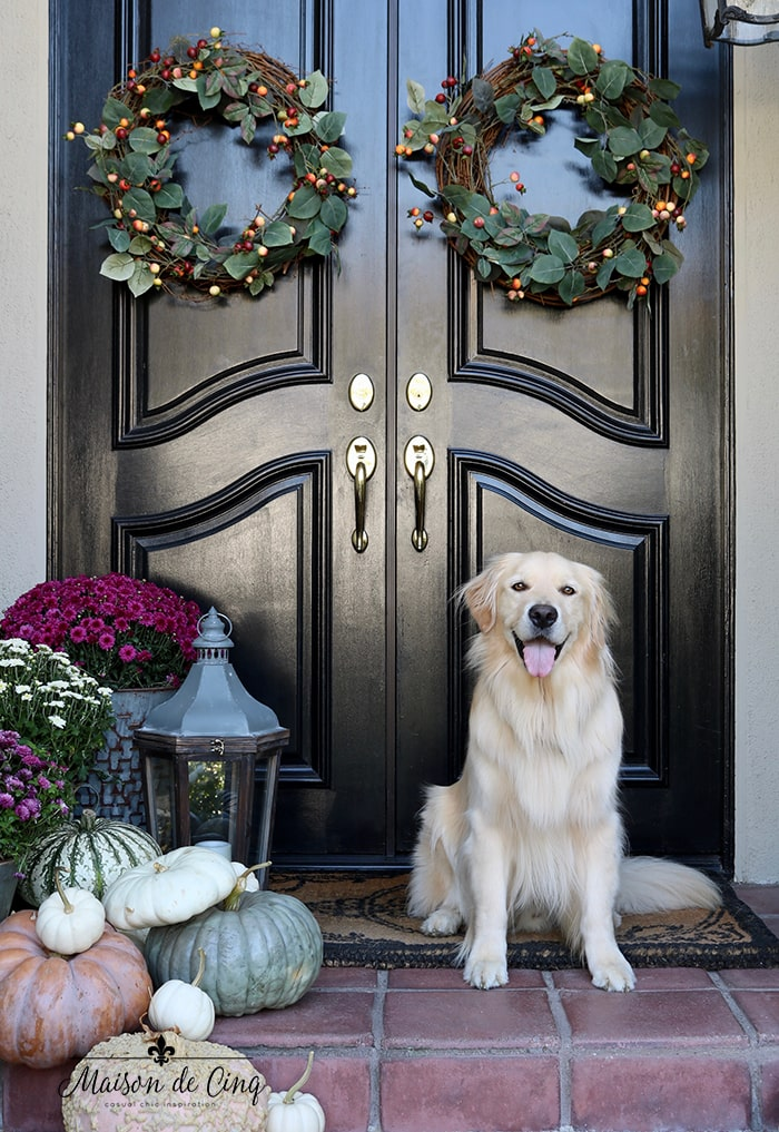 fall decorating ideas porch with wreaths pumpkins mums and Golden Retriever