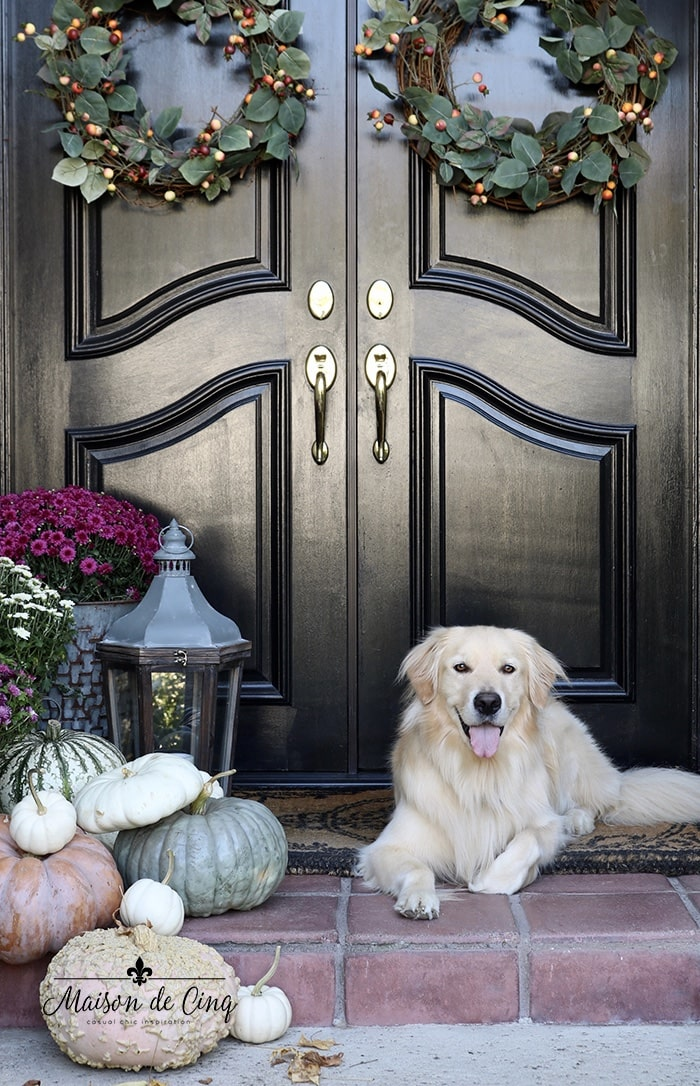 gorgeous fall porch decor black front doors with mums pumpkins wreaths and Golden Retriever