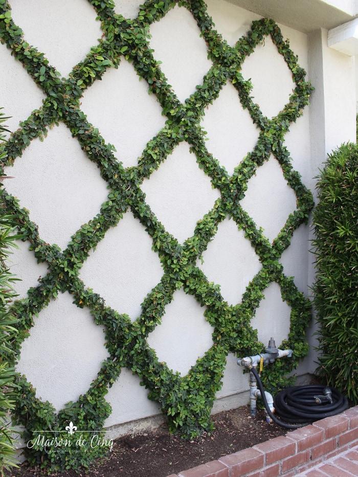 diamond pattern trellis on wall espalier