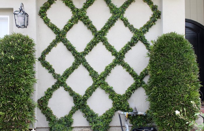 How to Make a Diamond Pattern Espalier: Creating a Belgian Fence