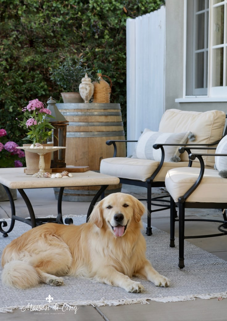 golden retriever in backyard sitting on outdoor rug French country outdoor patio refresh