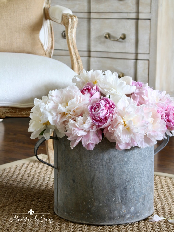 gorgeous pink peonies in rustic galvanized bucket French farmhouse touches in the living room