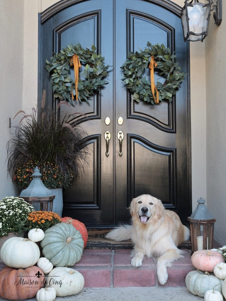 gorgeous porch with black doors wreaths and Golden Retriever fall decor