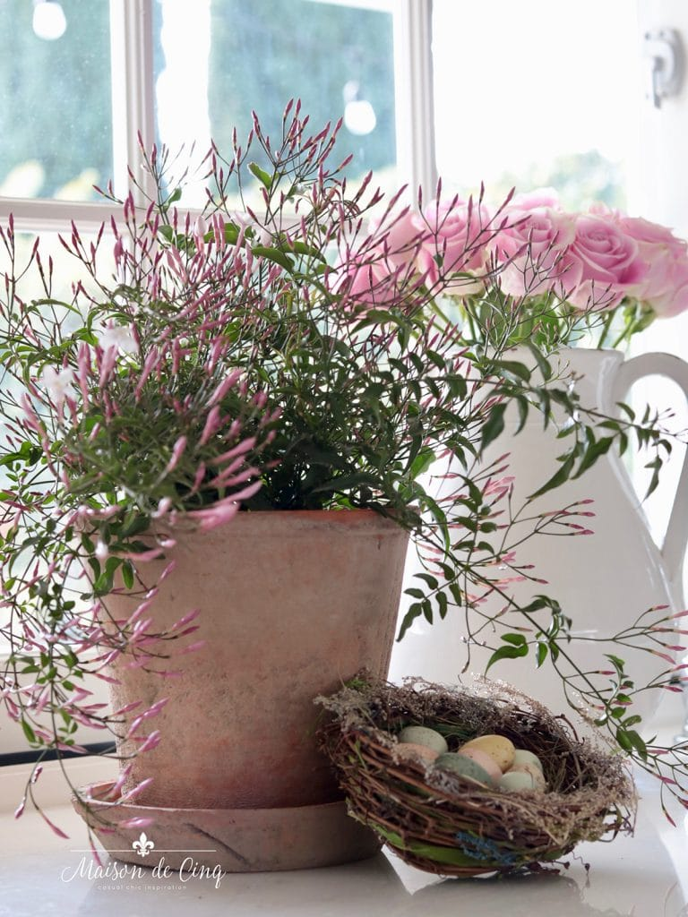jasmine plant with pink roses and little nest and eggs spring decorating