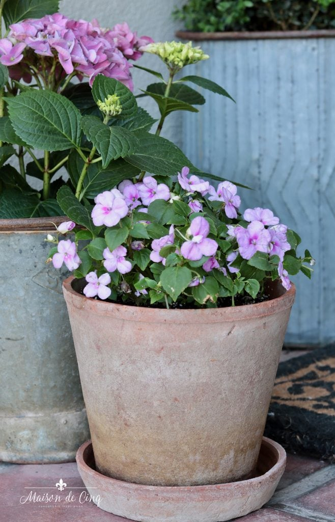 pots of pink impatiens and hydrangeas spring flowers