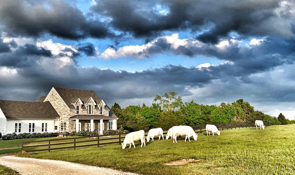 texas farmhouse gorgeous sky with clouds and cows in field