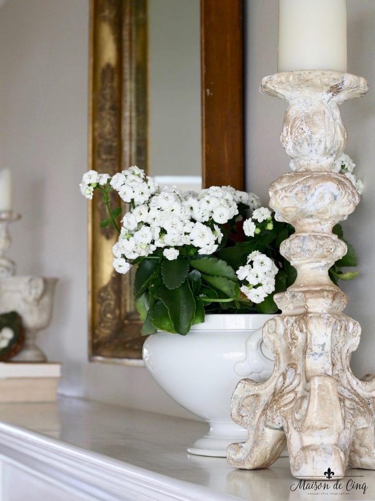 flowering kalanchoe in antique cachepot indoor plant ideas
