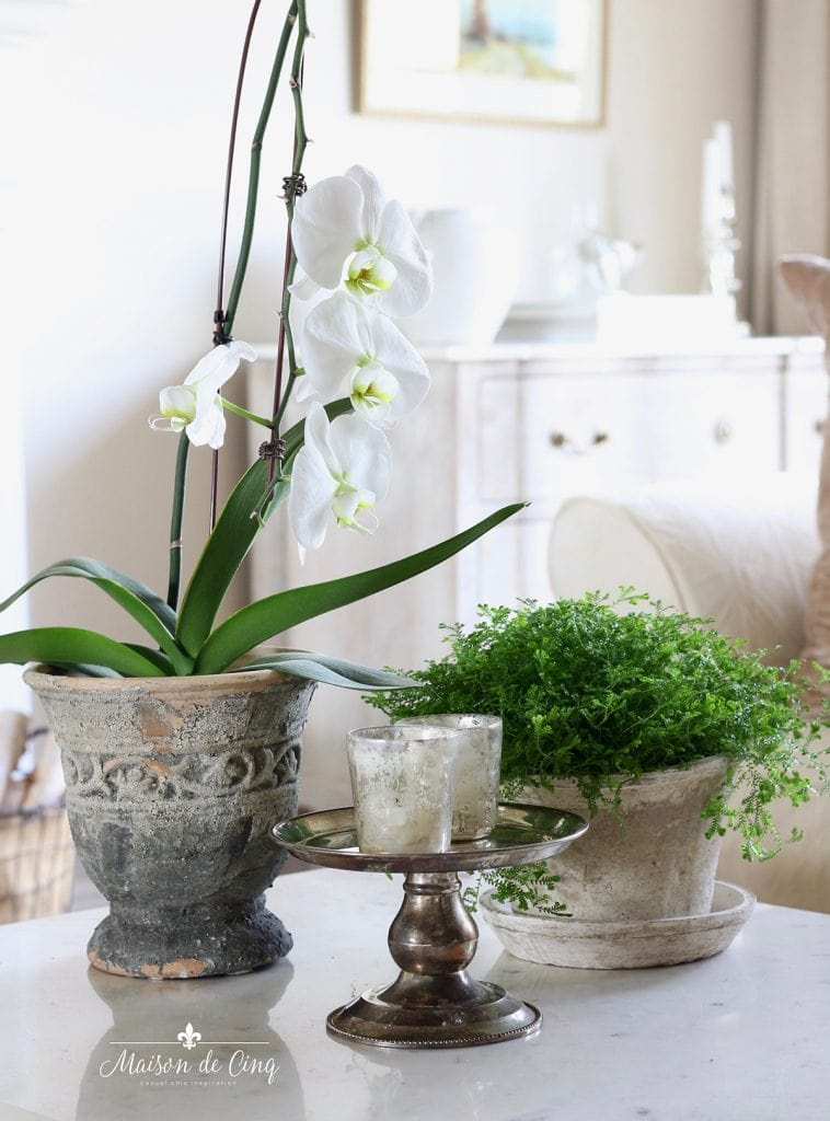 green houseplant in pot with orchid on coffee table indoor plants