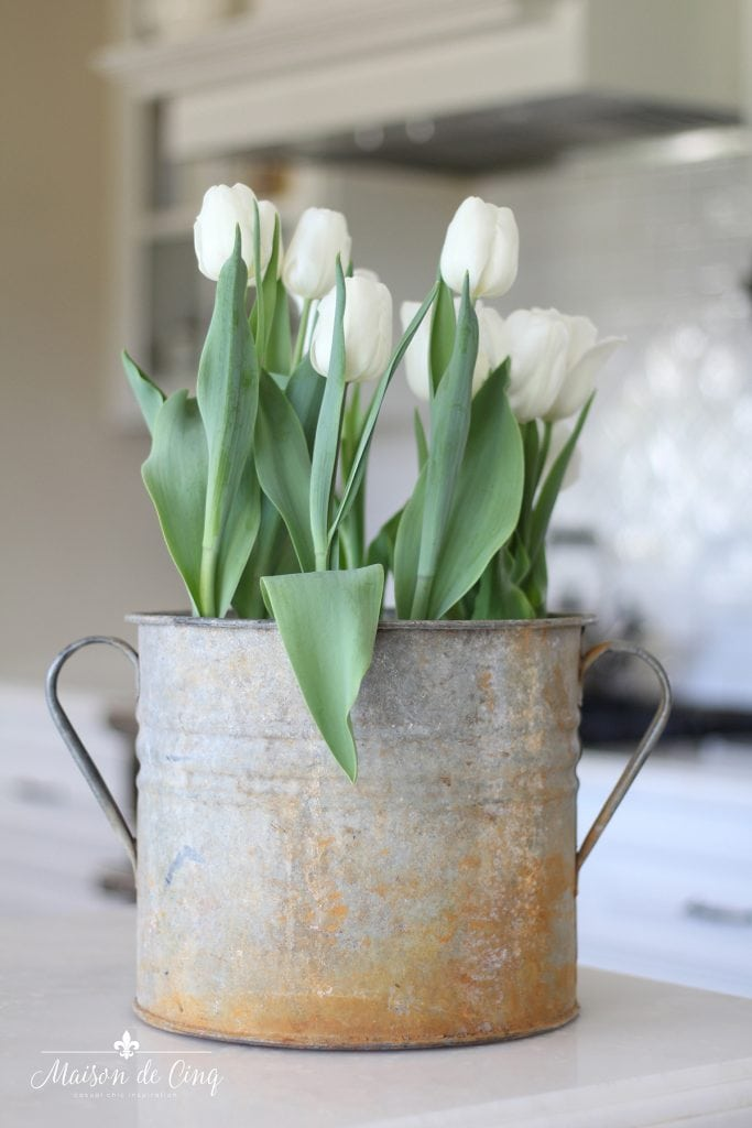 tulips in vintage French zinc bucket decorating with houseplants