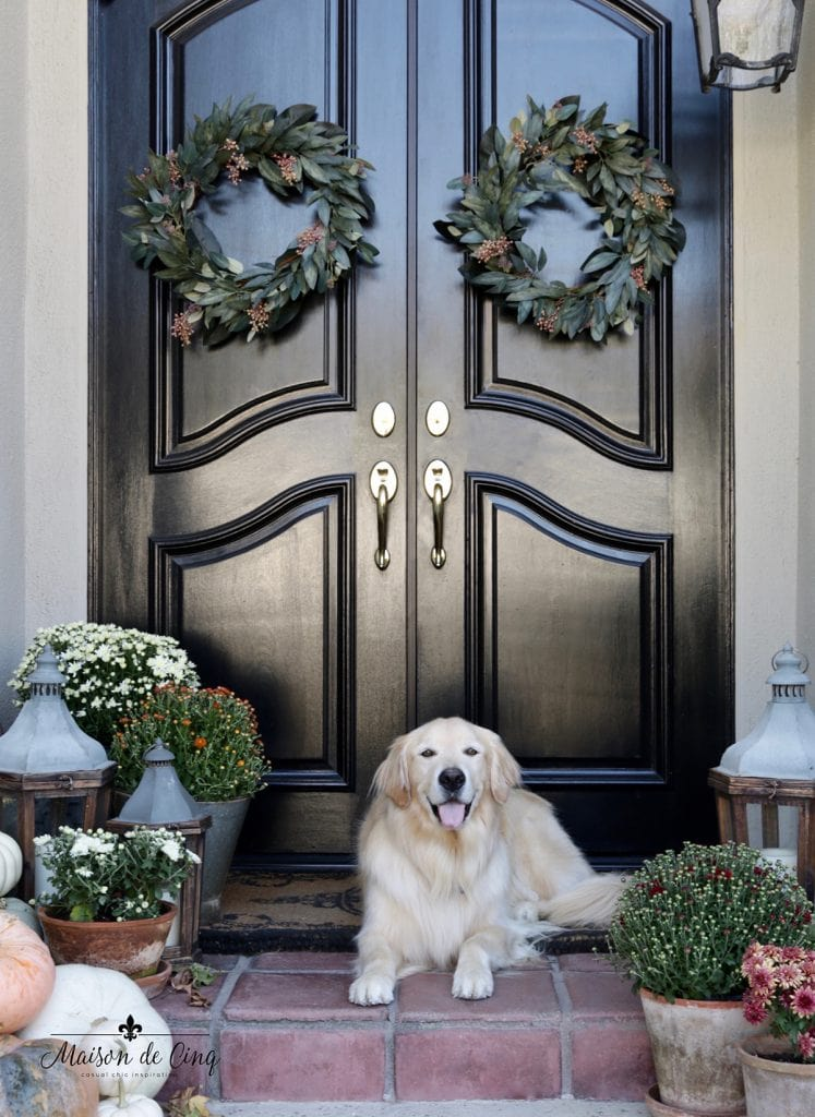 Fall porch decor ideas Golden Retriever on porch decorated for fall with wreaths and mums